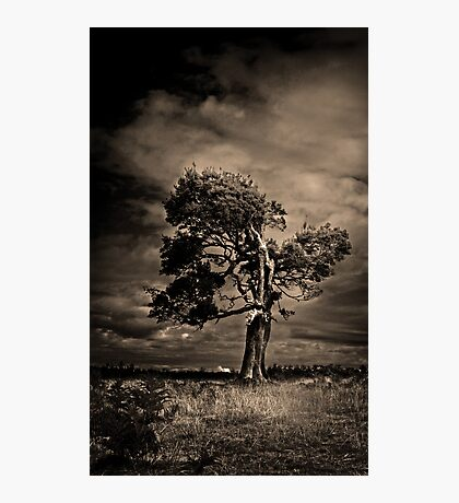 Guardian of the Forest Photographic Print