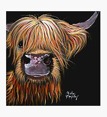 SCOTTISH HAIRY HIGHLAND COW 'HENRY' By Shirley MacArthur Photographic Print