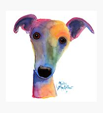 WHIPPET / GREYHOUND 'PANSY' By Shirley MacArthur Photographic Print