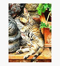 Kitten Snuggles Photographic Print