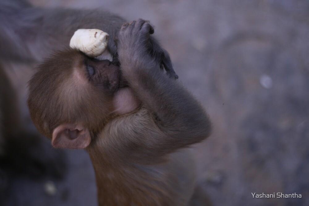 I Dream of Bananas by Yashani Shantha