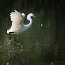 Dancing Egret by Eivor Kuchta