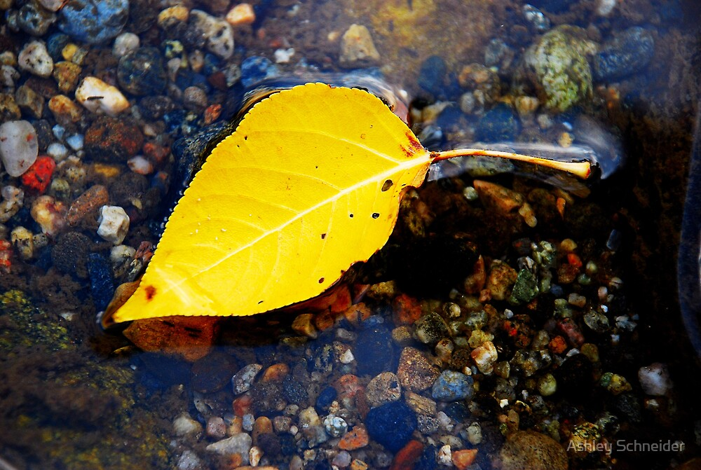 Floating Fall by Ashley Schneider