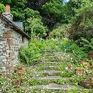 Garden steps covered in Erigeron by Judi Lion