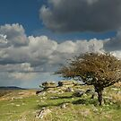 Wind-blown Hawthorn on Dartmoor by Judi Lion