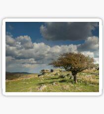 Wind-blown Hawthorn on Dartmoor Sticker