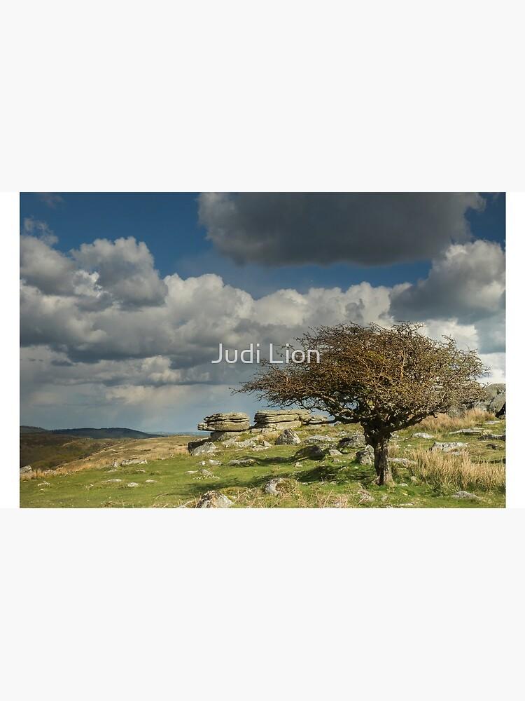 Wind-blown Hawthorn on Dartmoor by Sussexjude
