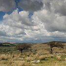 Clouds gathering over Combestone Tor by Judi Lion