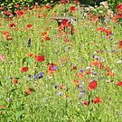 A wildflower meadow by Judi Lion