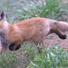 Baby Fox by Betsy  Seeton