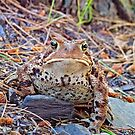 Toad by John Thurgood