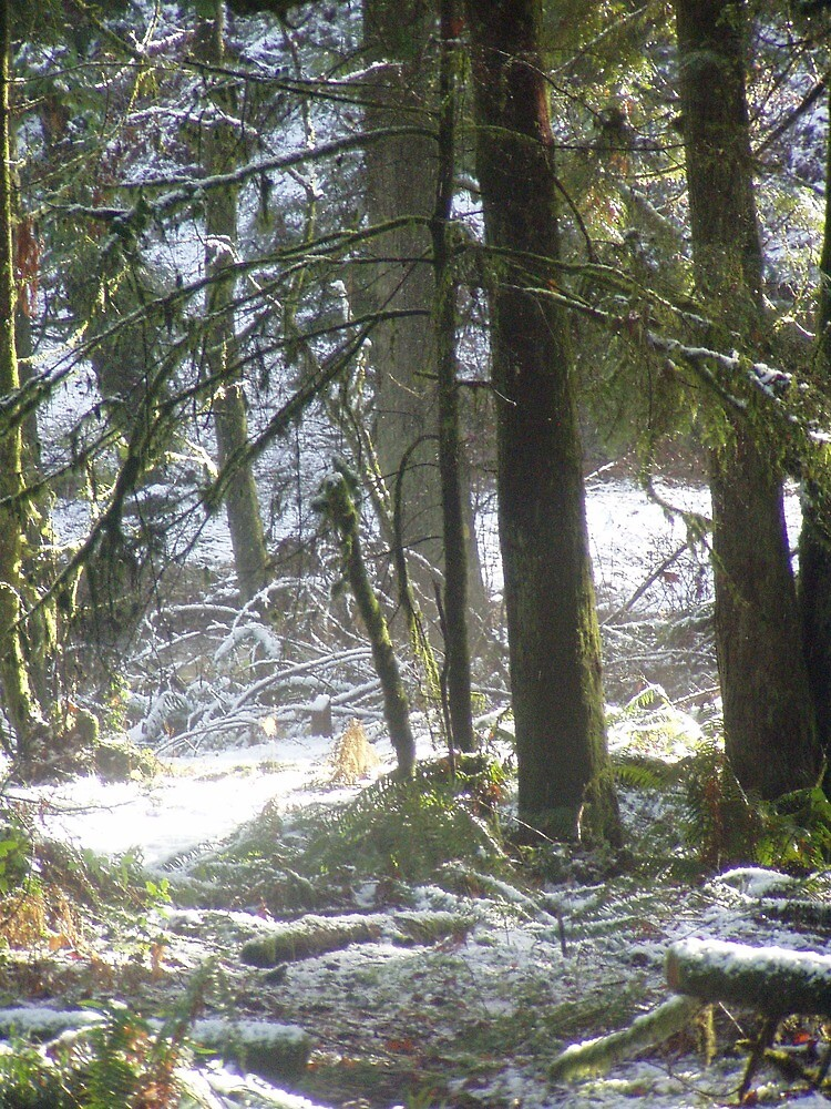 Forest Sun Rays in the  Snow #47 by Dawna Morton
