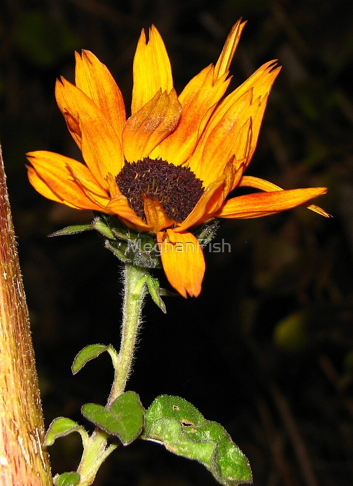 Sunflower by MeghanFish