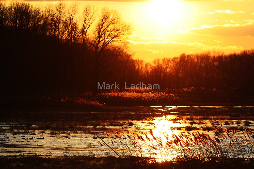 The Wetlands by Mark  Larlham