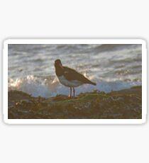 Oystercatcher at dusk Sticker