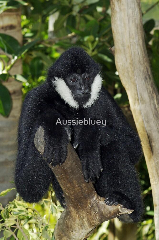 White Cheek Gibbon by Aussiebluey