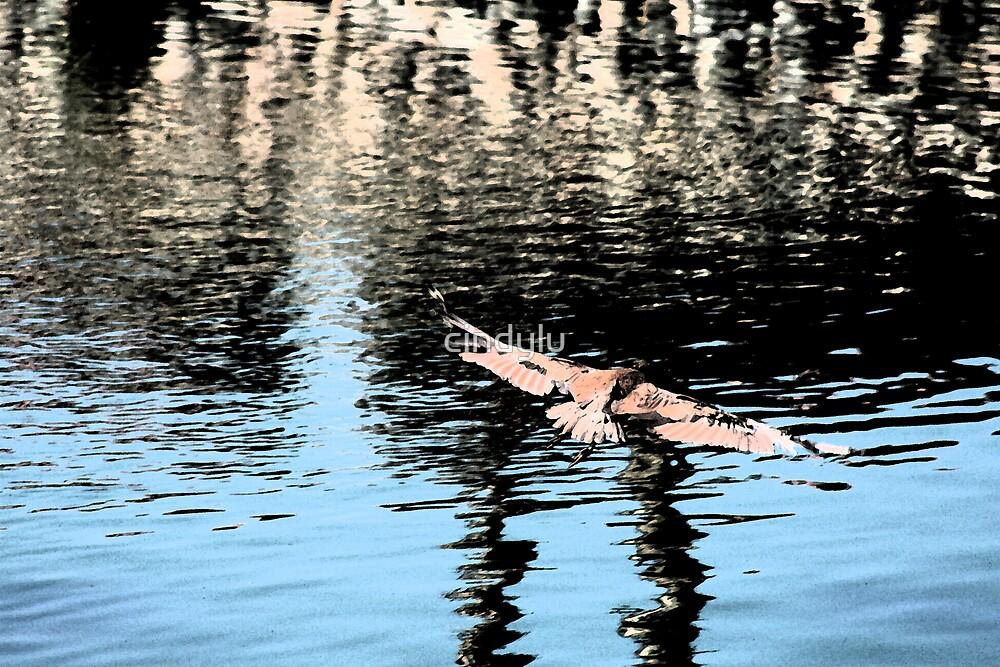 Soaring Bird by cindylu