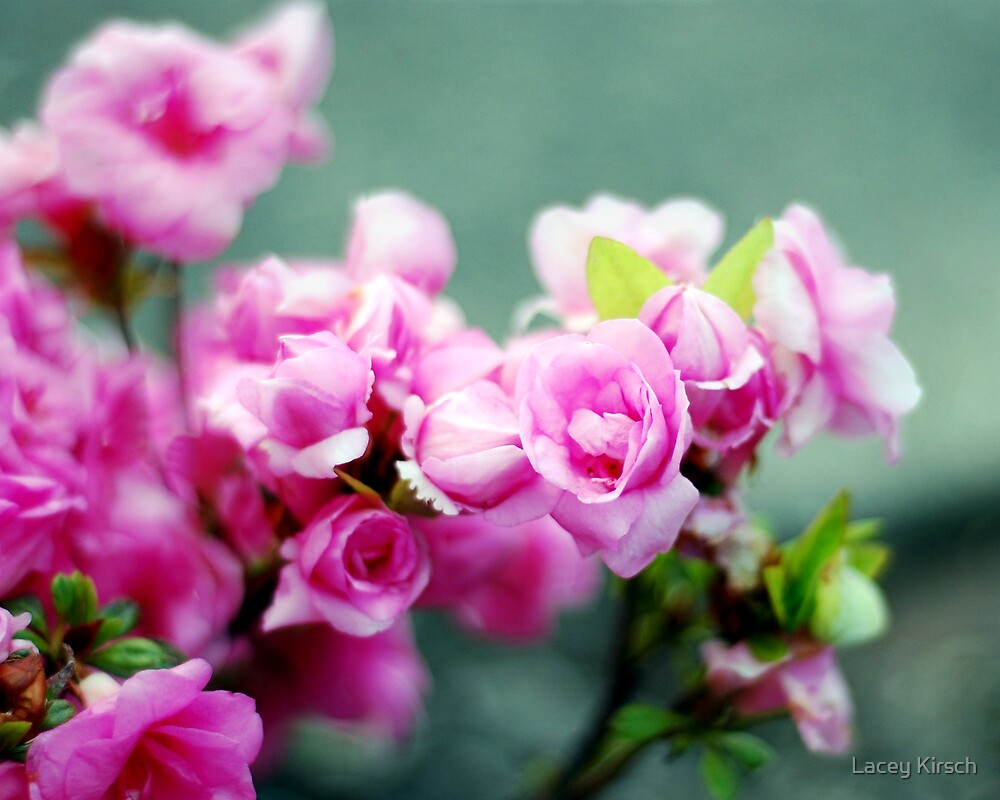 Pretty in Pink by Lacey Kirsch