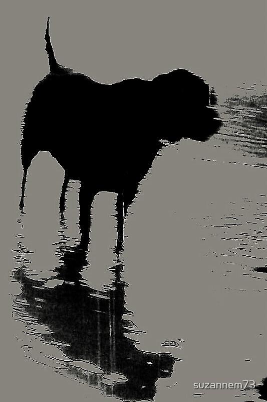 Puddle Dog by suzannem73
