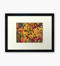 Coleus in Colored Pencil Framed Print