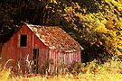Little Red Shed. by Todd Rollins