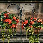 Summer Flowers. by Forfarlass