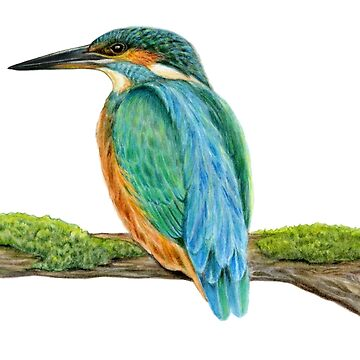 Common Kingfisher (Alcedo atthis) by edenart