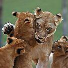 Playful Lions by Judson Joyce