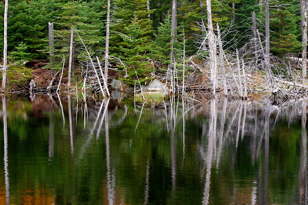 Reflections of Pine by Dave Law