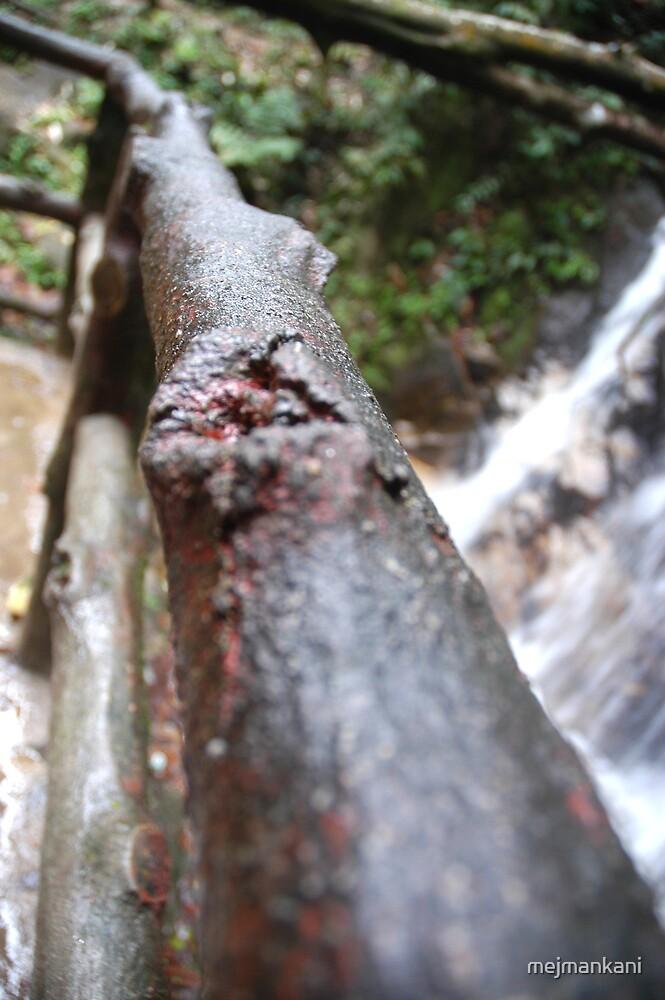 Close-up by mejmankani