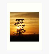 Sunrise gumtree Art Print