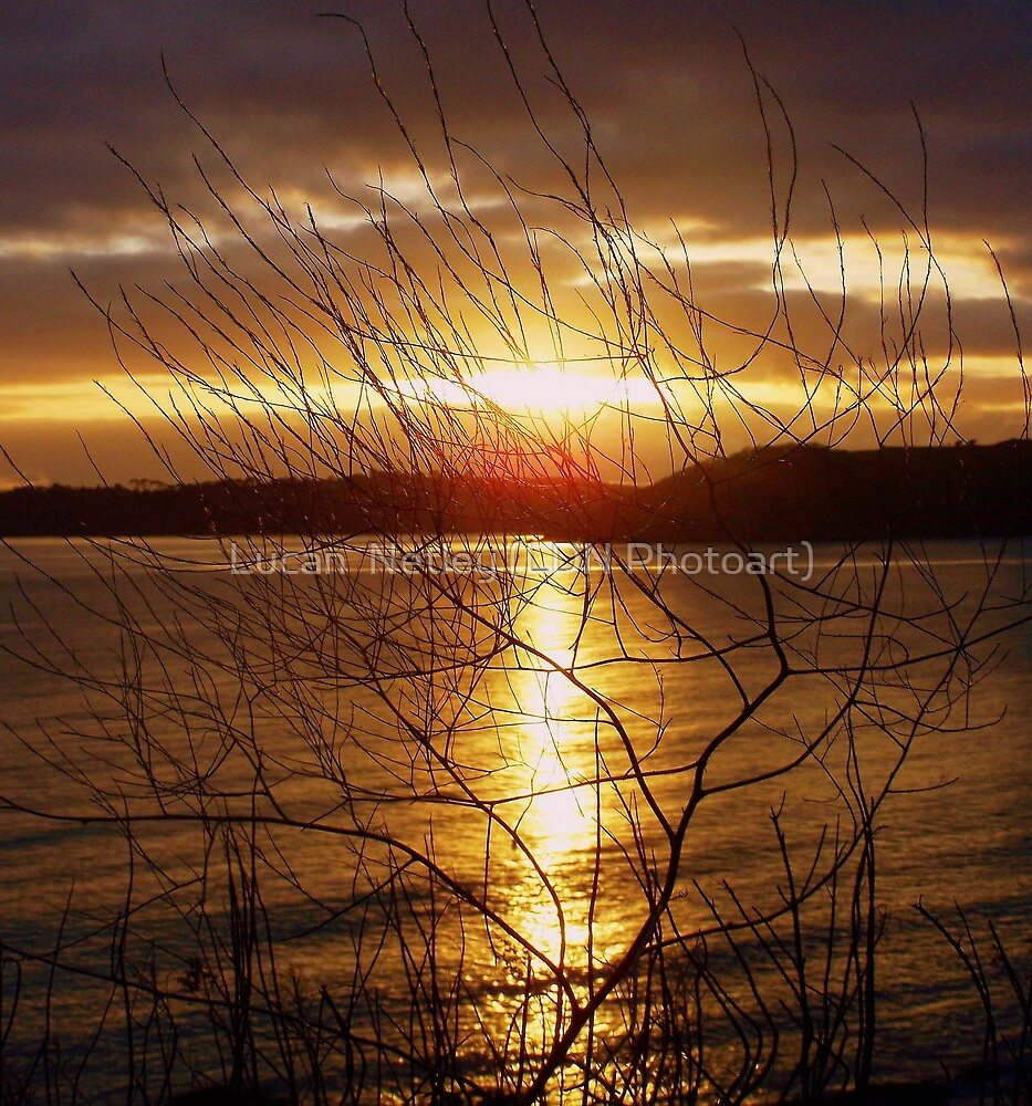 sunset through the undergrowth........ by Lucan  Netley (LDN Photoart)