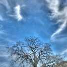 oak tree, landscape photography by SammyPhoto