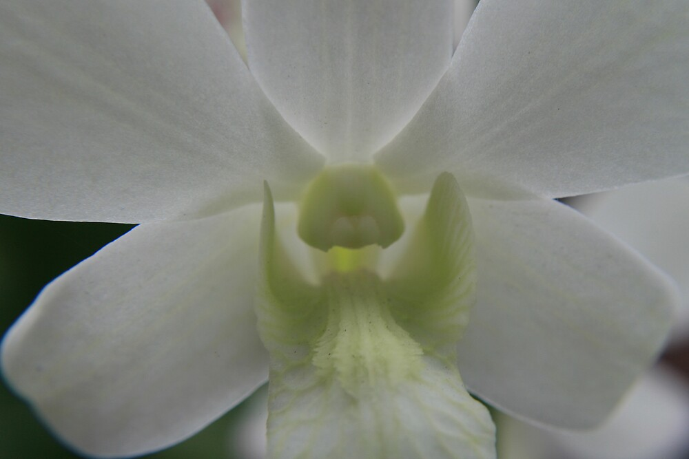 Orchid, Singapore by Leigh Penfold