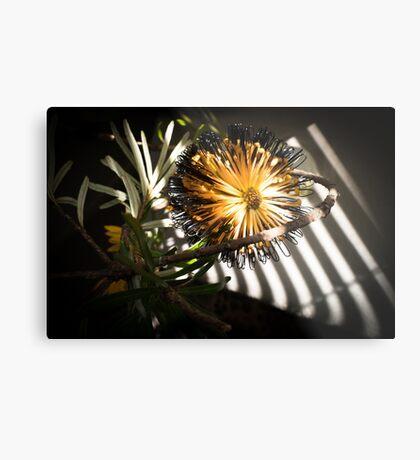 Banksia Still Life Metal Print