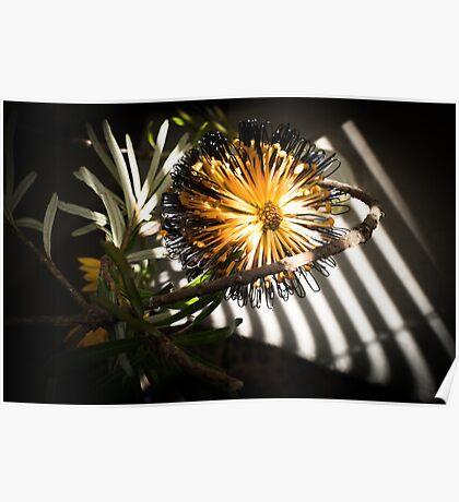 Banksia Still Life Poster