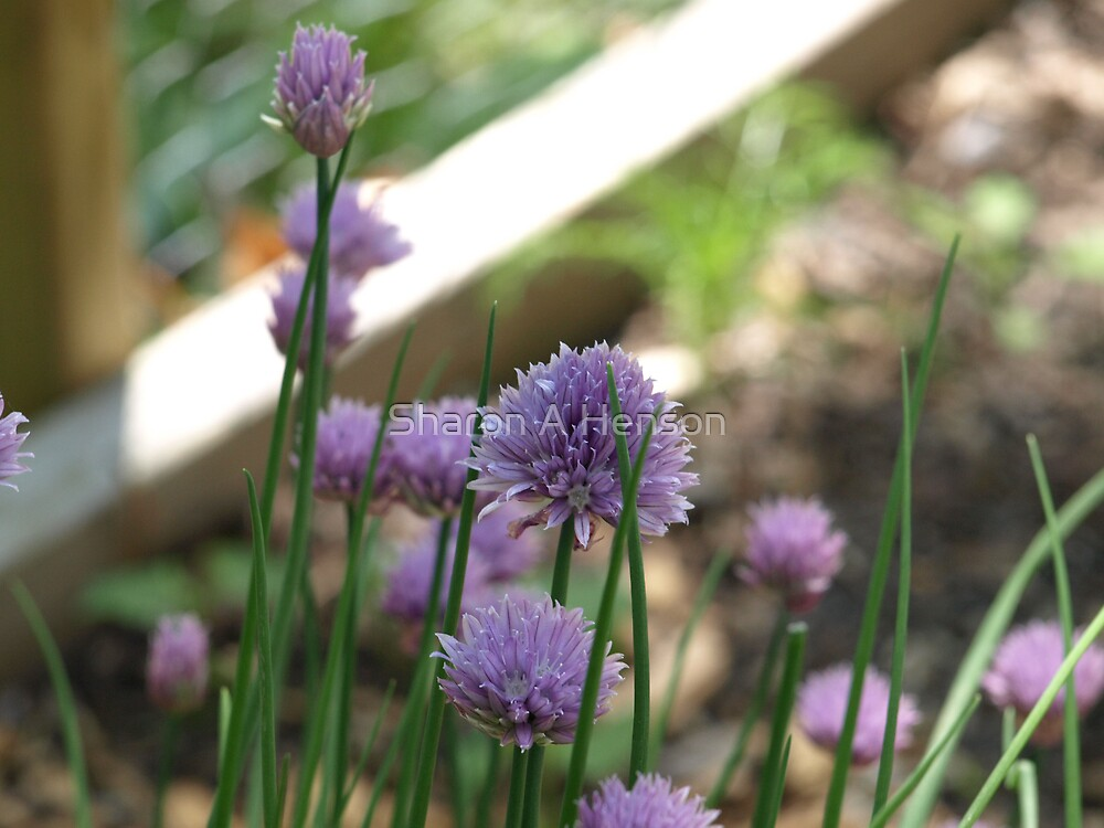 CHIVES by Sharon A. Henson