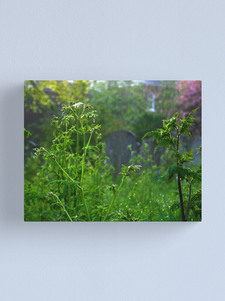Alternate view of Graveyard Nettles at Dawn Canvas Print