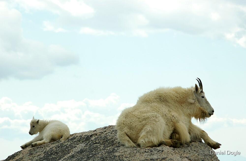Mountain Goat High by Daniel Doyle