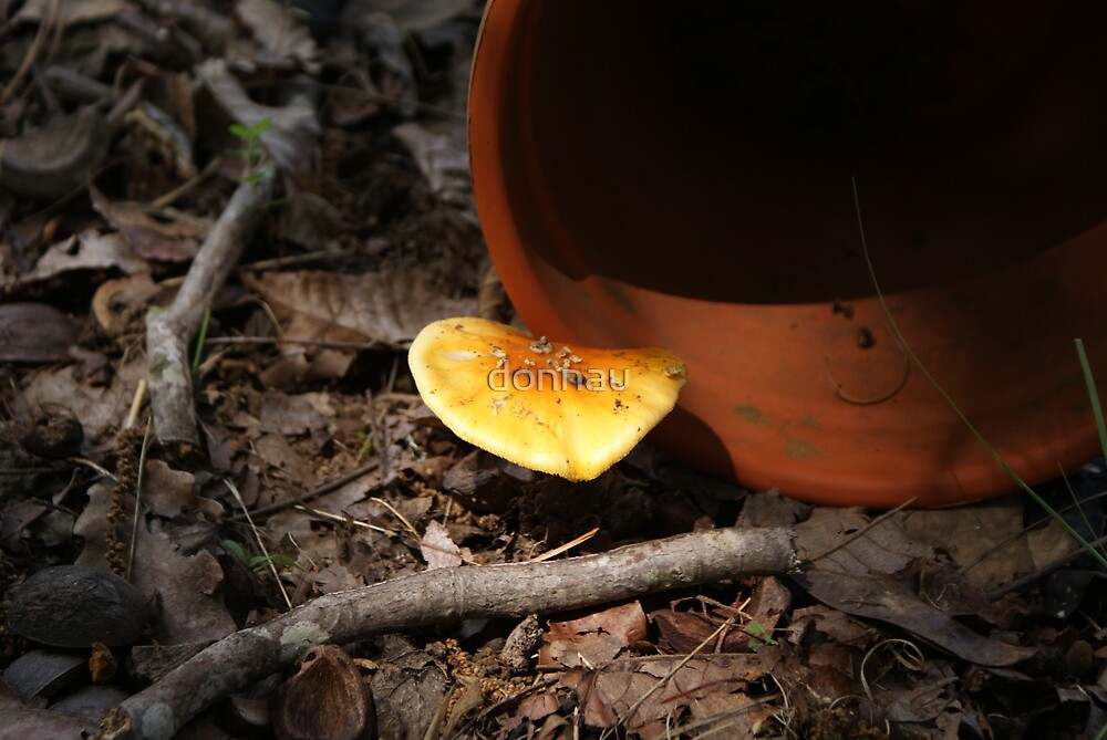 Terracotta Orange by donnau