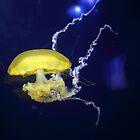 Jelly Fish by Laura Puglia