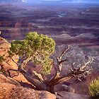 Living on the edge - Canyonlands National Park by Kathy Weaver