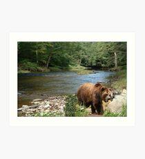 870-Summer Creek Art Print