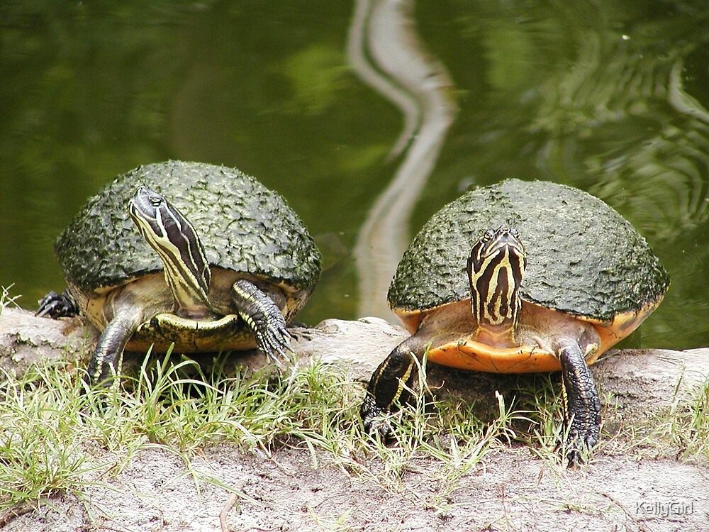 Turtles Mad at each other by KellyGirl