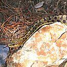 Garter Snake by John Thurgood