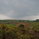 bridge, commondale, nym np by dougie1