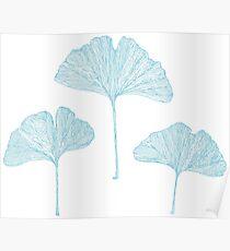 Ginko biloba leaves Poster