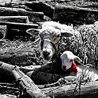 Ewe And Newborn Lamb by Al Bourassa