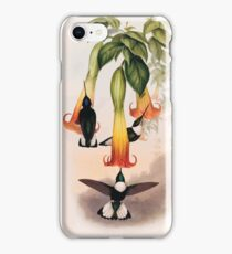 A monograph of the Trochilidæ or family of humming birds by John Gould 1861 V4 202 iPhone 8 Case