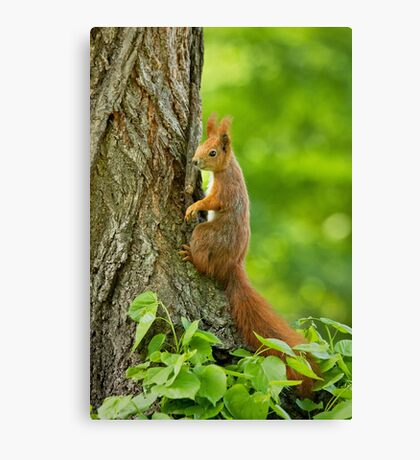 Cute is my middle name Canvas Print